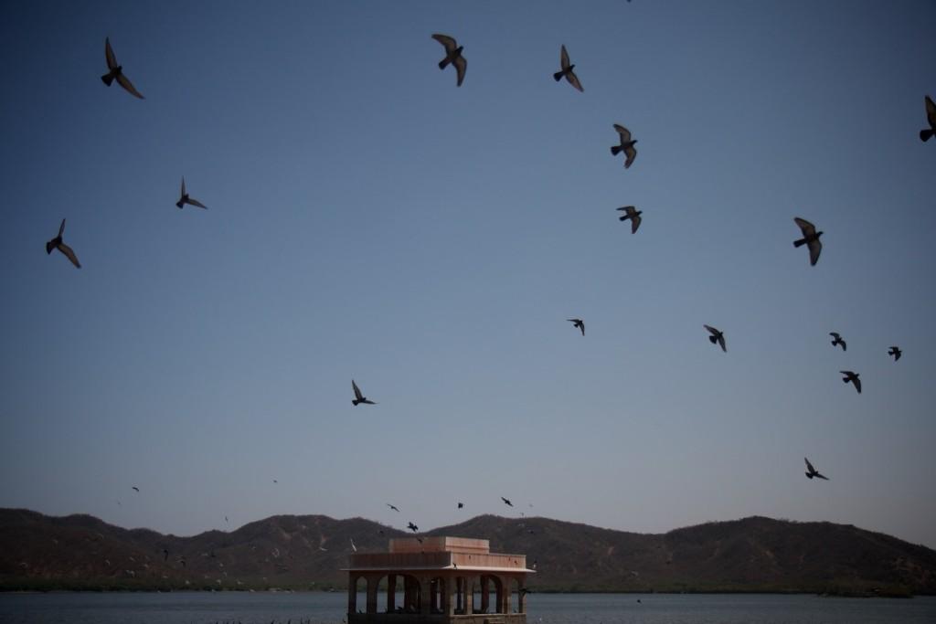 Some wildlife at Jaipur's Water Palace